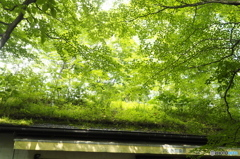 屋根上の世界