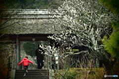 鎌倉Now5(東慶寺)