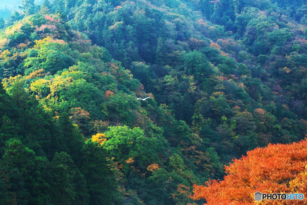 欅紅葉も美しく