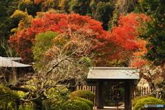 鎌倉Now01(浄智寺)