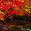 圓光寺秋色02(2010年11月)
