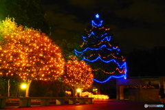 大学構内のクリスマスツリー