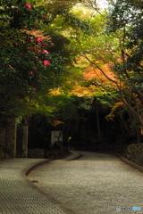 鎌倉Now06(鎌倉文学館前)
