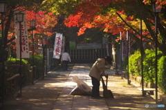 長岡天神秋色(2010年11月)