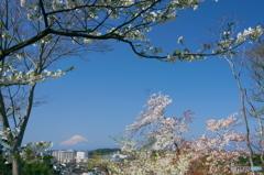 里山の春Ⅱ