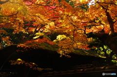 古刹秋の華やぎⅡ2010