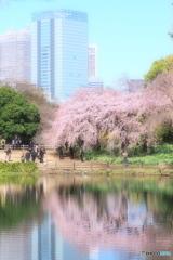 春そぞろ01(新宿御苑)