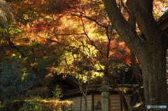 鎌倉Now13(瑞泉寺)