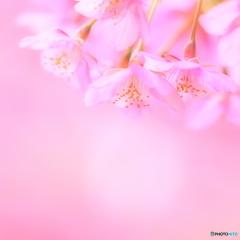 春 妖精たち