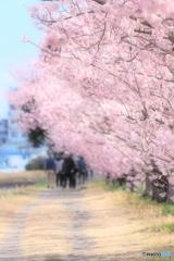 春木径にて