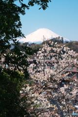 桜に富士に