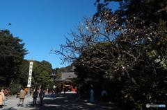 鎌倉Now02