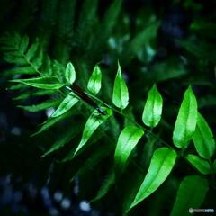 緑葉の妖精