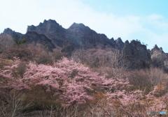 奇岩と桜と
