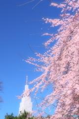 春そぞろ02(新宿御苑)