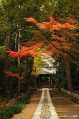 鎌倉Now05(寿福寺)