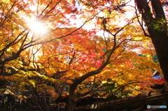 高桐院秋色02(2010年11月)
