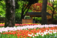 横浜公園春の装い
