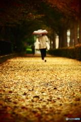 台風運んた深秋