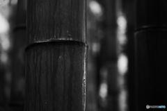 竹の涙と自分の気持ちと