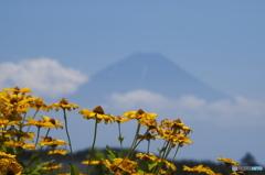 ルドベキアと富士