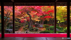 圓光寺秋色03(2010年11月)