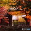 曼殊院秋色01(2010年11月)
