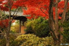 鎌倉Now08(海蔵寺2)