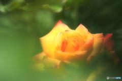 豊かに咲く