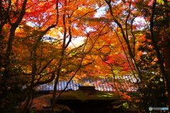 高桐院秋色01(2010年11月)