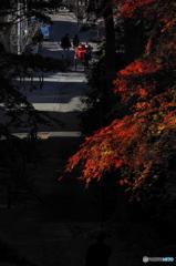 鎌倉Now14(妙本寺)