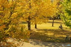 黄葉空間を走る