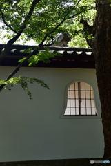 古寺の白壁