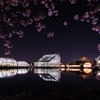 富山県中央植物園の夜桜