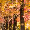 色づく並木