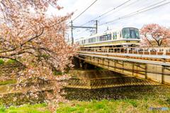 大和路線と桜(Ⅱ)