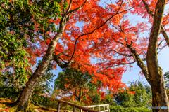 霊鑑寺の紅葉