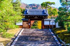 霊鑑寺の黄葉