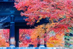 三門の彩景