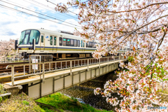 大和路線と桜(Ⅲ)