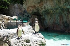 直立ペンギン
