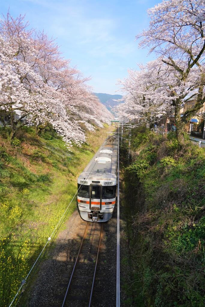 山北の桜と御殿場線