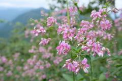 秋の気配 萩の花