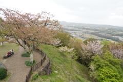 葉桜でがっかりだな。。スマホでもみるかな~