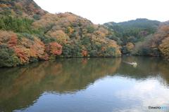 亀山湖 紅葉狩り 紅葉