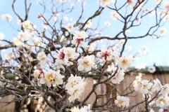 昭和記念公園 2018 春が来た!
