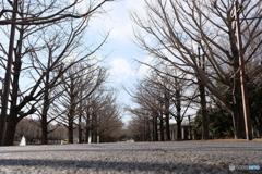 昭和記念公園 冬模様 2018