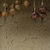 玉葱と土壁