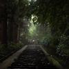 雨の杉参道