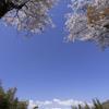 広角レンズの春